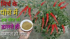 Gutter Garden, Small Garden Design, Vegetable Garden, Green And Gold, Gardening Tips, Make It Yourself, Youtube, Plants, Vegetables