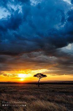 """Sunset on the Masai Mara"" by Thomas Chamberlin (lone Acacia tree)"