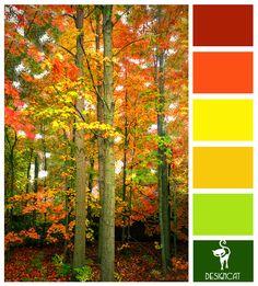 Autumn 1:  Green, Red, Orange, Yellow - Colour Inspiration Pallet