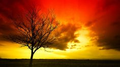 Burning Tree by Johnny Gomez, via 500px