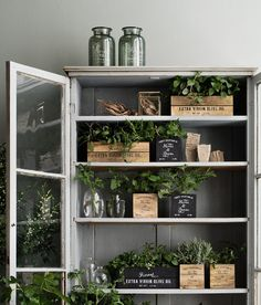 rustic + plants + glass door cabinet