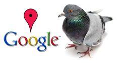 Google Pigeon (Paloma): Nueva actualización del algoritmo de google