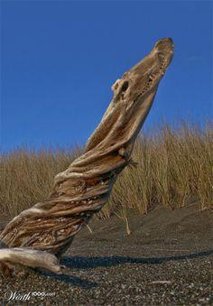creative croc or real driftwood - Worth1000