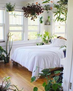 Considering plants can purify your air and help you feel calm, they make pretty great roommates, y'all. Considering plants can purify your air and help you feel calm, they make pretty great roommates, y'all. Clean Bedroom, Modern Master Bedroom, Calm Bedroom, Master Suite, Room With Plants, Bedroom Windows, Dream Decor, New Room, Bedroom Decor