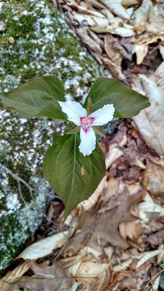 Photos - New England Over 50 Hiking Group (Manchester, NH) - Meetup Fisher Mountain May 16, 2015 White Mountains NH