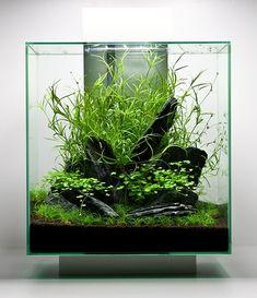 IWAQU Toko Ikan Hias - Aquascape, Ikan Hias, Aquarium dan Aksesories