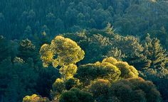 Discovery that trees give off ELECTRICITY creates a buzz. www.dailymail.co....