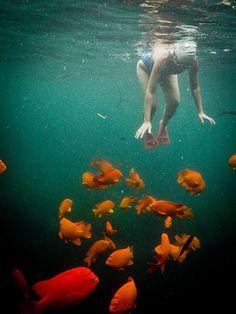 La Jolla Cove. Love snorkeling with the Girabaldi, they aren't shy!