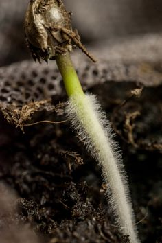 Grow Guide: Sprouting Cannabis Seeds............................. If you're a cannabis enthusiast there is nothing more satisfying than growing your own stash of the magical herb. Worried you don't have a green thumb? Don't fret! We, at Marijuana.com, are here to walk alongside you during this journey. Marijuana / Cannabis / News / Grow Guide