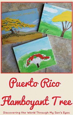 Discovering the World Through My Son's Eyes : Puerto Rican Flamboyant Tree
