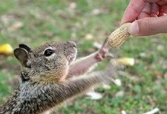 """""""Oh, thank you!"""" i;m gonna start feeding the squirrels on campus. i think they're soo cute!"""