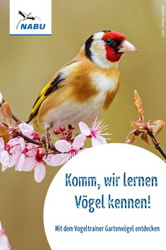 Gartenvogel Kennenlernen Vogel Erkennen Vogel Im Garten Vogel