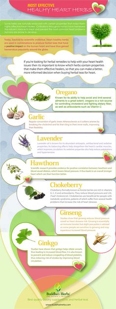 7 Herbs that Help Your Heart The below info-graphic lists some herbs that are good for heart. I've also listed a more comprehensive list of heart-health herbs, vitamins and amino acids. #Hearhealth #Herbs