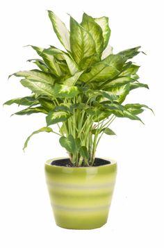 Low Light Houseplants On Pinterest Indoor Gardening