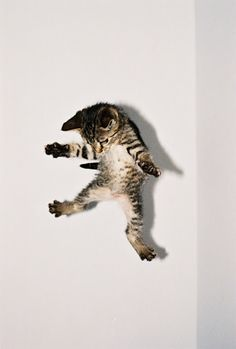 """""""A cat is better than you are, more honest, more graceful, smarter for her size, better coordinated, and infinitely more beautiful."""" -- Leonore Fleischer"""