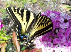 How to Attract Butterflies in 6 Steps