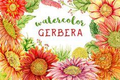Posted by @newkoko2020 Watercolor gerbera flowers by kateja on @creativemarket