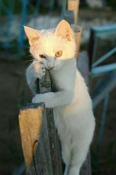 Click the Photo For More Adorable and Cute Cat Videos and Photos animal and worksheet for kids, funny and complacent nba rookies. Cute Kittens, Cats And Kittens, Ragdoll Kittens, Tabby Cats, Bengal Cats, Kitty Cats, Animals And Pets, Baby Animals, Funny Animals