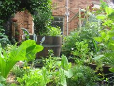 Small backyard permaculture