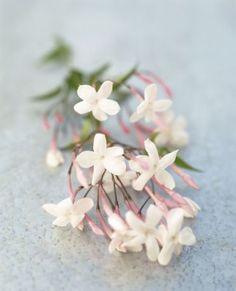 9 Essential Oils that Help You Get to Sleep: Jasmine Plante Jasmin, Jasmin Tattoo, Jasmine Flower Tattoos, Chlorophytum, Cascade Bouquet, Cascading Bouquets, Design Floral, Plantation, Planting Flowers