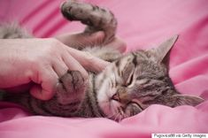 Cat purrs naturally calm your nerves - 11 Reasons Your Crazy Cat Obsession Makes You Happier And Healthier
