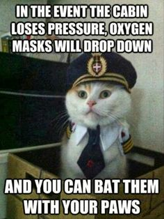 """In the event the cabin loses pressure, oxygen masks will drop down and you can bat them with your paws."""