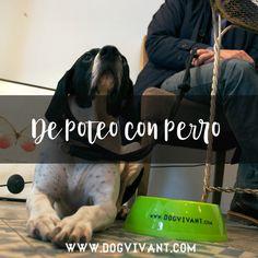 Si te gusta quedar para unas cañas o unos vinos pero no quieres dejar sólo a tu perro, estos locales te encantarán.