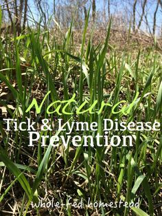 On dogs disease ticks lyme