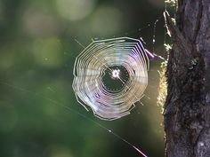 Spider Web--looks just like rings in a tree--just like my fingerprint