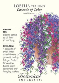 $1.79. Cascade of Color Lobelia. A cascade of small jewel-toned flowers for window boxes, large containers and hanging baskets. HEIRLOOM. Trailing Flowers, Cascading Flowers, Potted Flowers, Garden Design Software, Blue Garden, Lawn And Garden, Garden Tools, Garden Ideas, Window Box Flowers