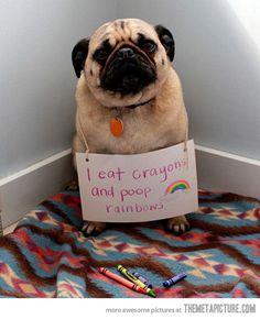 """I Ate Crayons, And Pooped The Rainbow  Gives A Whole New Meaning To The Skittles Quote, """"Taste The Rainbow""""."""