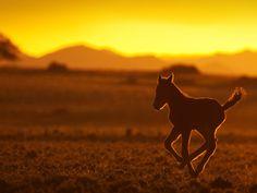 Η φωτογραφία της ημέρας απο την εκπομπή Africa's Wild West. Namibia: A foal in the sunset. #picoftheday #NatGeoChannelGR #NGC