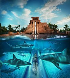 How's this for a fun activity? Guests can take a Leap of Faith through a shark-filled lagoon from the iconic Mayan Temple at Atlantis 141-acre water park, Aquaventure!