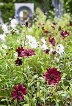 Green, Plants, Heart, Fields, Garden, Plant, Planting, Planets