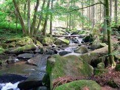 Wandern Saußbachklamm in Waldkirchen Bayerischer Wald Naturerlebnis
