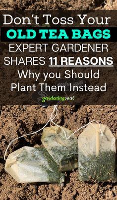 Garden Yard Ideas, Lawn And Garden, Garden Bugs, Edible Garden, Growing Vegetables, Growing Plants, Gardening For Beginners, Gardening Tips, Home Vegetable Garden