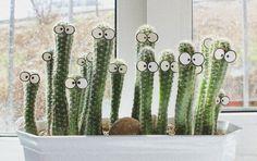 ► ► Mil ideas para la casa y el jardin ♥: Cactus con ojos... los mirones de la casa....