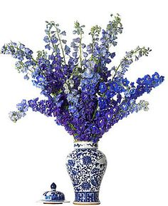 Delphiniums in a blue and white ginger jar...awesome!