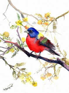 Painted Bunting Original watercolor painting 12 X by ORIGINALONLY, $42.00