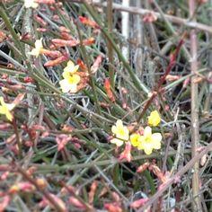 La #primavera sta arrivando!