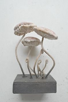 Textile Fungus soft sculpture.  Each Fungus specimen is made by myself... Made from thick cotton they are tightly stitched over thick steel wire,