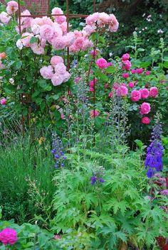Sonja Bannick Pictures - note staking on roses Amazing Gardens, Beautiful Gardens, Beautiful Flowers, English Country Gardens, Delphiniums, Blue Delphinium, My Secret Garden, Garden Cottage, Garden Living