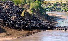 #serengeti #africa
