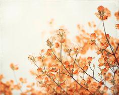 Orange Flower Photography, Floral Wall Art, Orange Rust Nature Photo, Flower Picture, Orange Cream N - Easy flowers Spring Aesthetic, Orange Aesthetic, Desert Aesthetic, Pop Art Wallpaper, Flower Wallpaper, Wallpaper App, Wallpapers, Floral Wall Art, Arte Floral