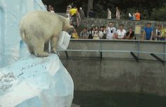 Y'all, I'm dead. Polar bears are the coolest. | Look At This Polar Bear Dribbling A Basketball Underwater! Look At Him!