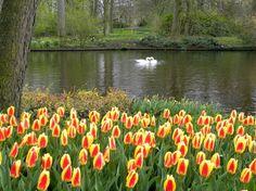 Keukenhof, el jardín de los tulipanes holandeses