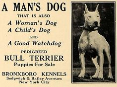 1927 Advertisement for the Bronxboro Kennels, breeders of the American Bull Terrier
