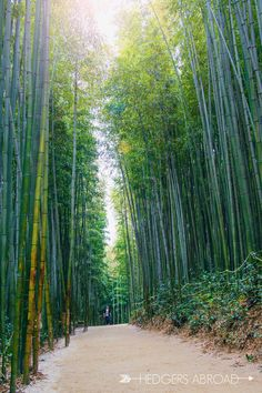 Bamboo Forest // DAMYANG, SOUTH KOREA www.travel4life.club