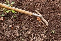 Preparing your garden soil carefully is key to having a healthy garden.Healthy garden soil leads to healthy plants. Healthy plants lead to healthy humans. Perfect Plants, Cool Plants, Gardening For Beginners, Gardening Tips, Flower Gardening, Gardening Quotes, Starting A Vegetable Garden, Vegetable Gardening, Planting Vegetables