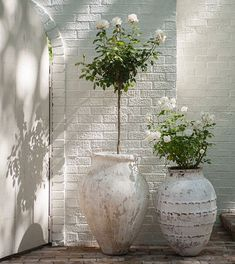 MILIEU Magazine (@milieumag) • Instagram photos and videos Gardening For Beginners, Gardening Tips, Container Gardening, Life Is Beautiful, Beautiful Gardens, Olive Jar, Seed Starting, White Decor, Green Plants